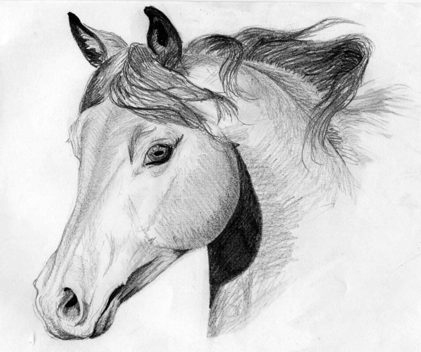 dessin cheval 3d