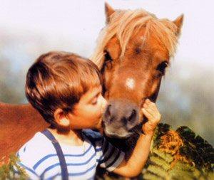 Poly poney