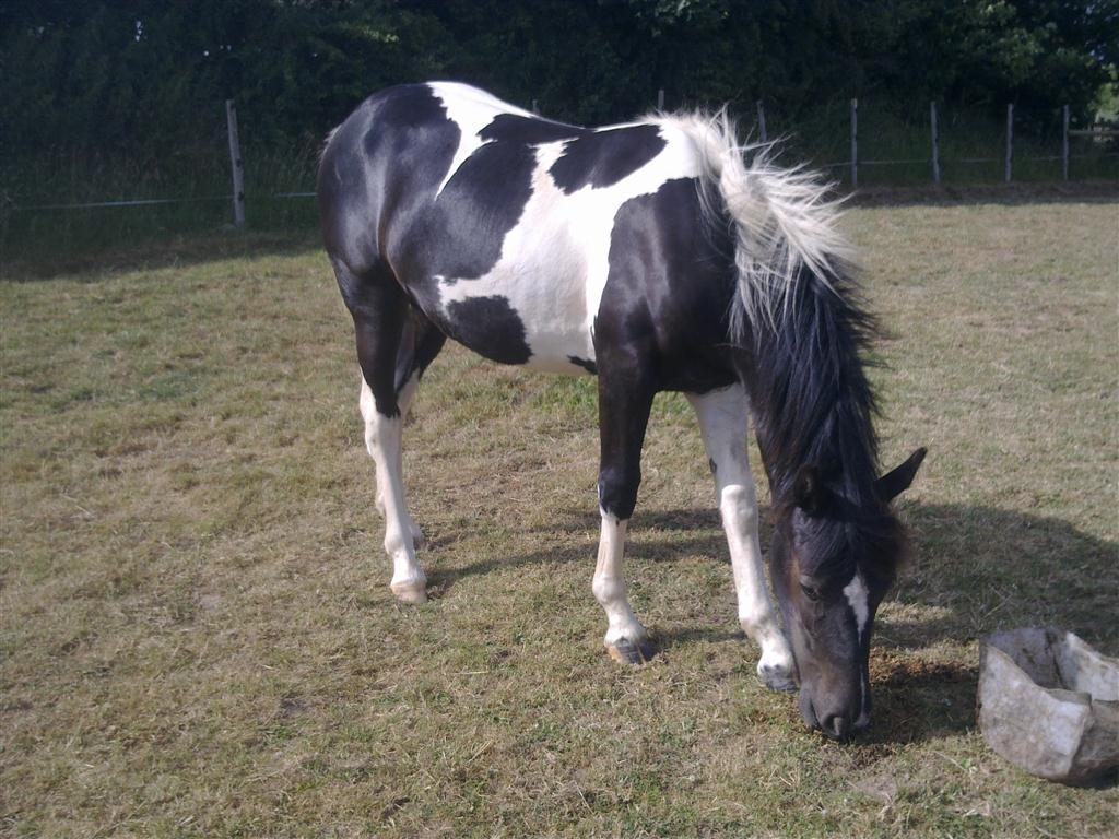 photo cheval noir et blanc photos chevalphotos cheval. Black Bedroom Furniture Sets. Home Design Ideas