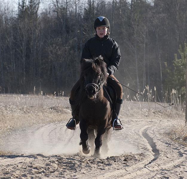Photo poney Shetland