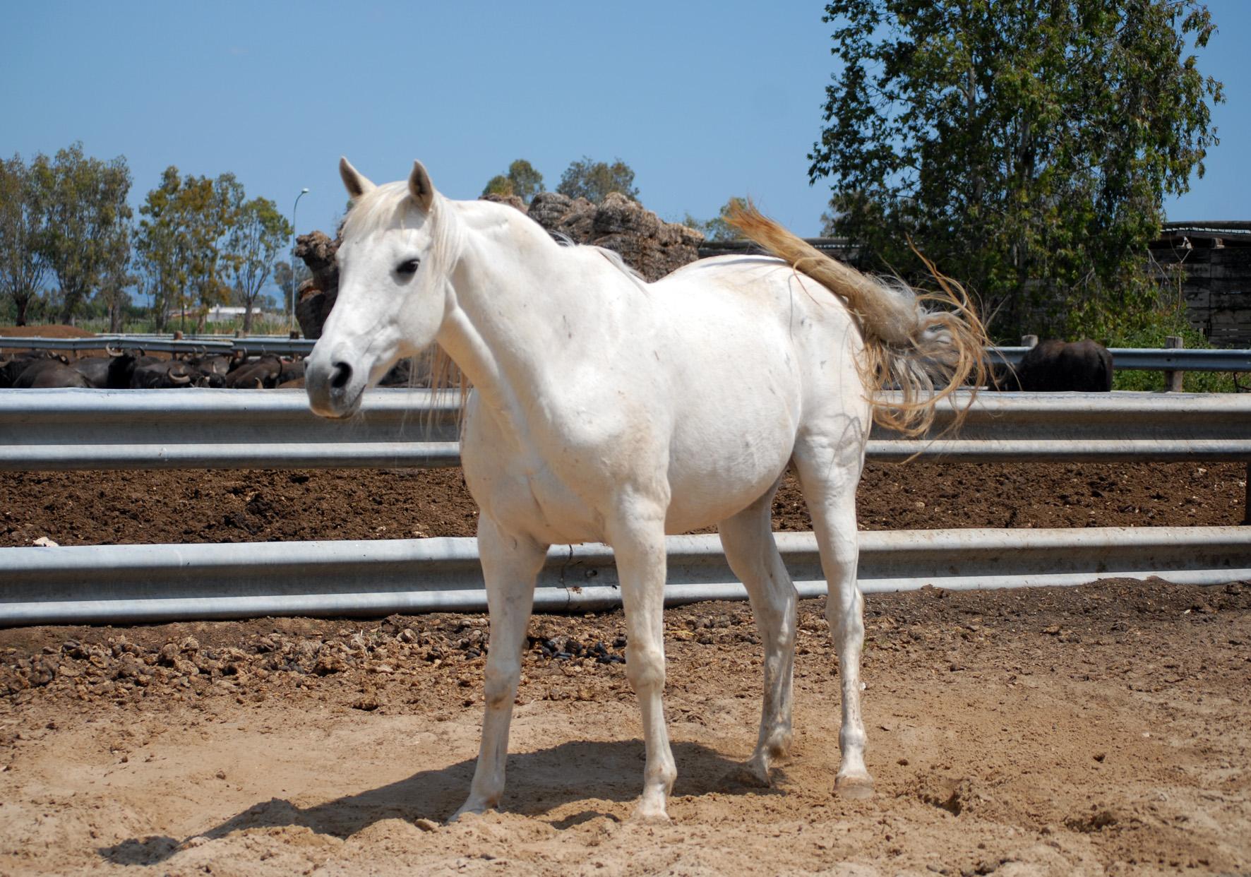Photo cheval blanc