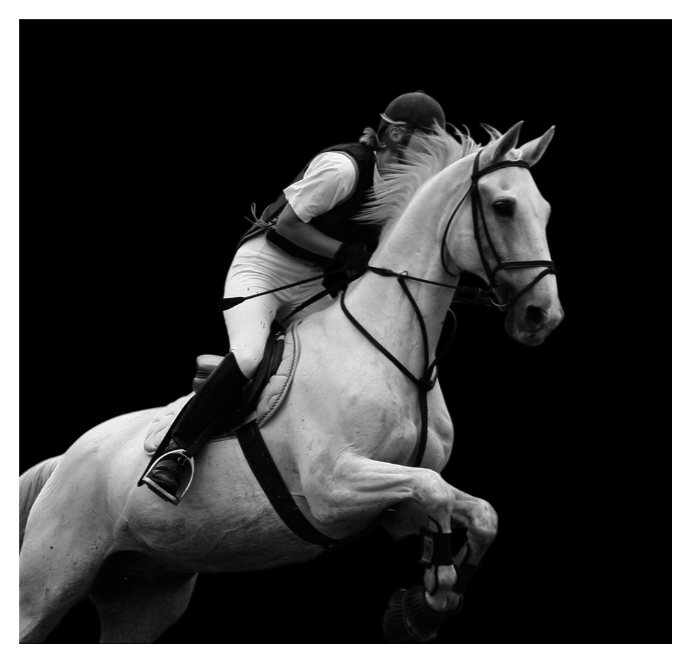 Cheval blanc, photo en noir et blanc