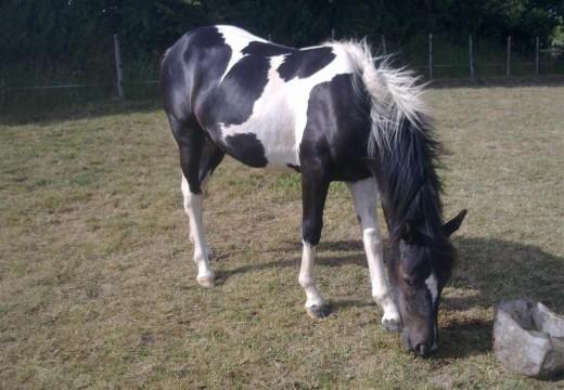 Photo cheval noir et blanc