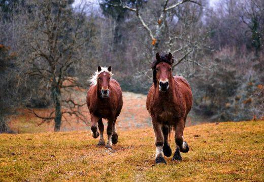 Comment prendre de belles photos de chevaux en course ?