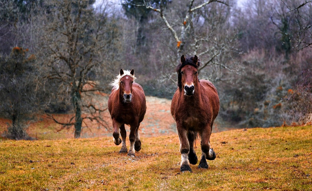 photos chevaux